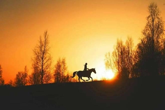 Molėtai horses