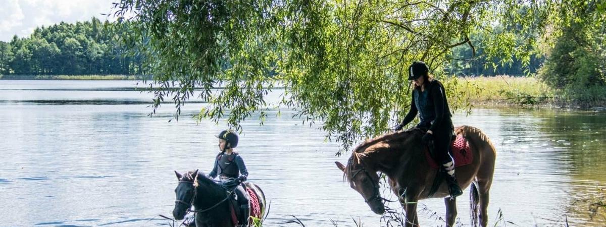 Oaza koni