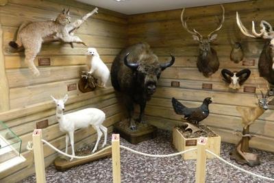 Ežerų žvejybos muziejus, Antano Truskausko medžioklės ir gamtos ekspozicija